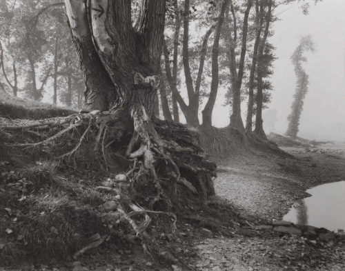 Josef Sudek  A walk on Troja Island 1940-45.jpg