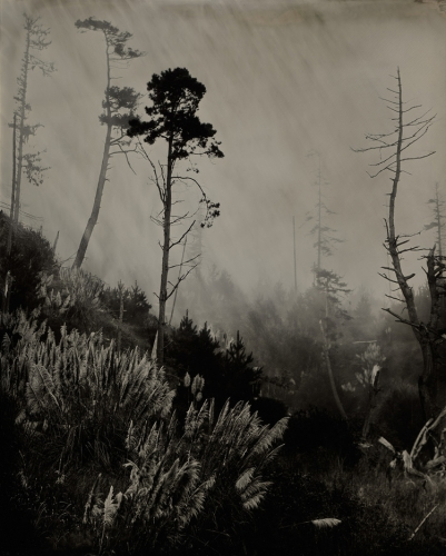 Kerik Kouklis Trees near Gualala Californie.jpg