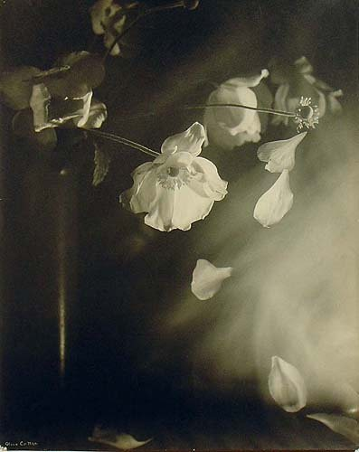 OLive Cotton Windflowers 1939.jpg