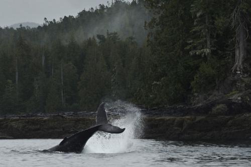 thomas p peschak great bear rainforest 2.jpg