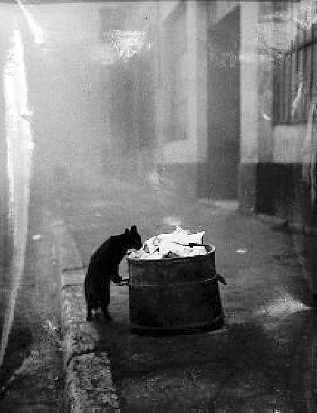 Sabine Weiss 1950 Lyon.jpg