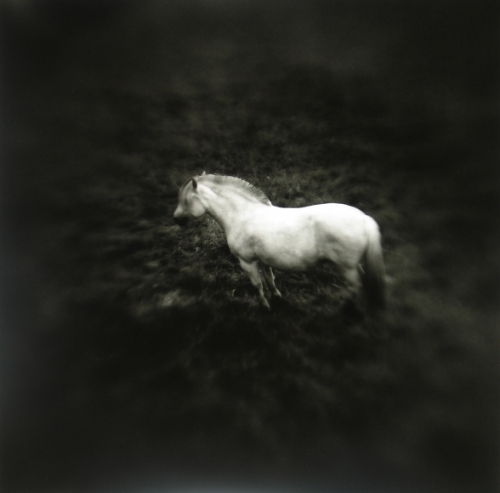 Keith Carter Norwegian Pony #1, 2005.jpeg
