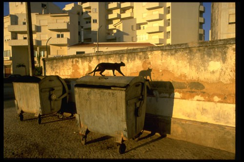 gregory spaid Cat and Shadow, Lagos, Portugal, 1987.jpg