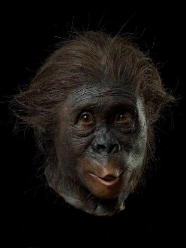 Kenis & Kenis autralopithecus africanus.jpg