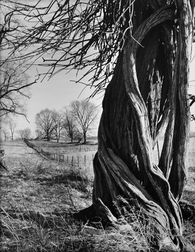 Linda Butler série Death of a farm Fence Row, Georgetown, KY.jpg