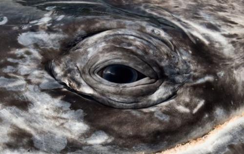 christopher swann-baleine oeil.jpg