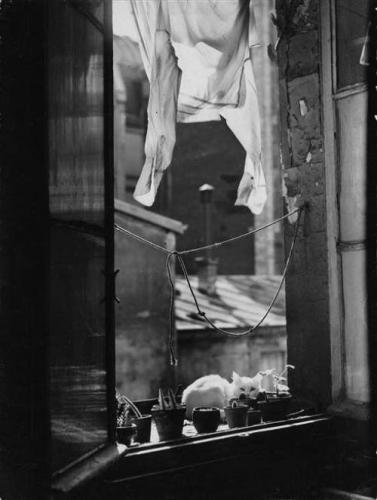 White cat, 1954.n.jpg