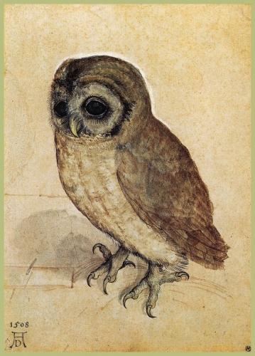 Albrecht Durer The Little Howl 1508.jpg