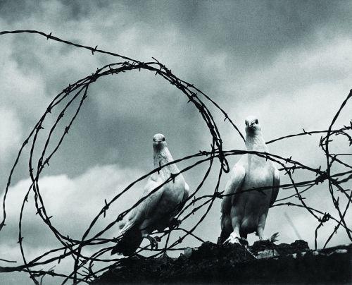 Fou-li TCHAN war and peace 1951..jpg