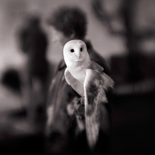 Keith Carter White Owl 2004.jpg