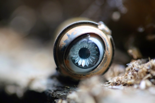 John Katz Old Doll's Eye.jpg