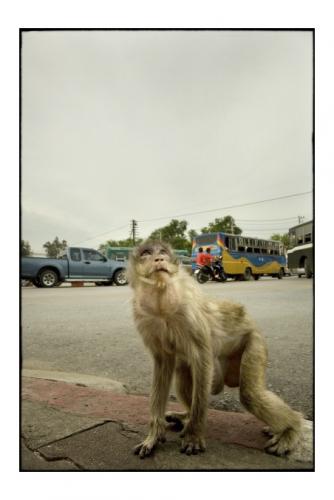 Simon Kolton monkey's city18.jpg