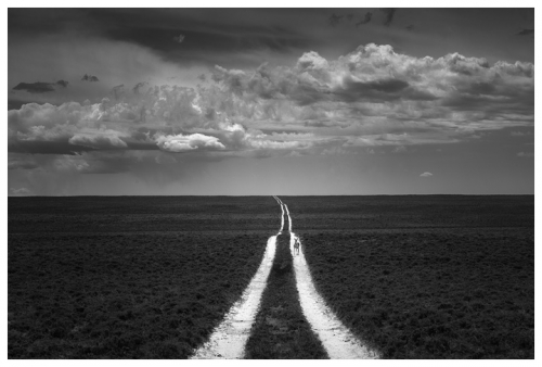 chuck kimmerle Curious Pronghorn and Road Ruts.jpg