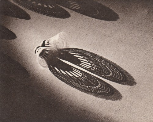 Hing fook kan 1953 shadow show.jpg