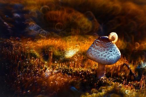 magdalena wasiczek _autumn-light_87467941.jpg