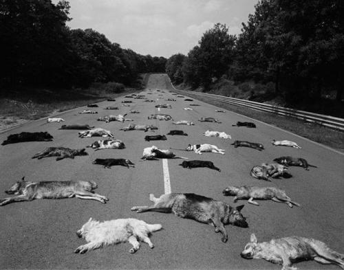 Manule Litran  a fait déposer sur le circuit de Magny-Cours les 140 chiens abandonnés en seulement deux jours que la SPA a dû euthanasier_n.jpg