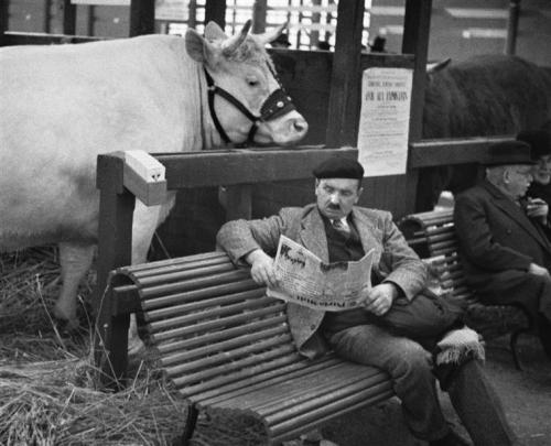 André Kertész paris-1er-mars-1931-salon-de-lagriculture.jpg