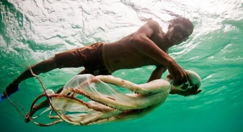 james morgan octopus.jpg