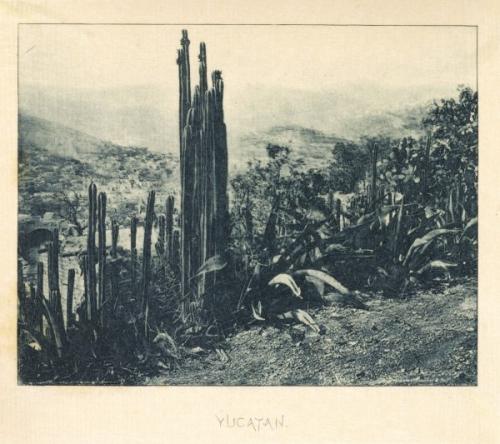 William Henry Jackson Yucatan.jpg