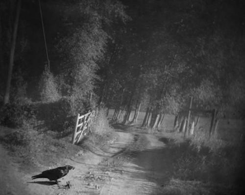 Raymond meeks Crow, Fence.jpg