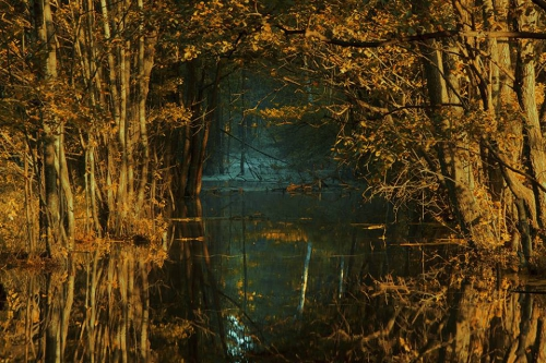 Michal Karcz parc national de la Biebrza.jpg