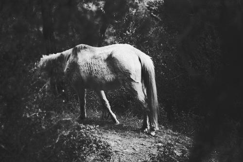 Oleg_Andreev_comme_un_cheval_fourbu.jpg