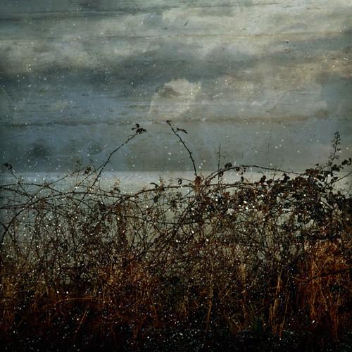Troy Ruffels Bramble, from Bramble series. 20110.jpg