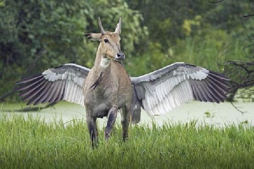 Jagdeep Rajput Keloado National park Rjasthan inde.jpg