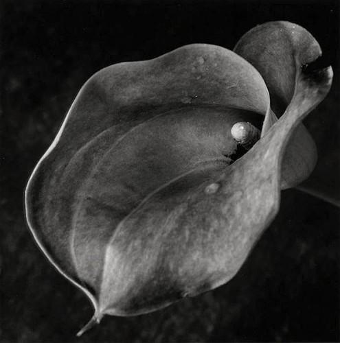 Tamaki Obuchi,Japanese, b.1956.jpg