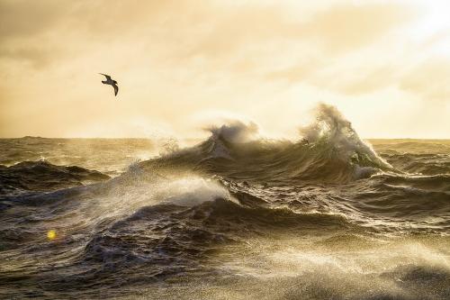 Justin Hofman Falkland Islandsjpg.jpg