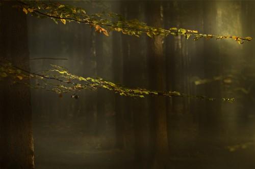 Uschi Wo Herbstlichter.jpg