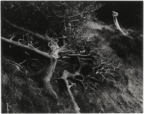 Edward Weston, Sand Erosion, Carmel Beach, 1932t.jpg