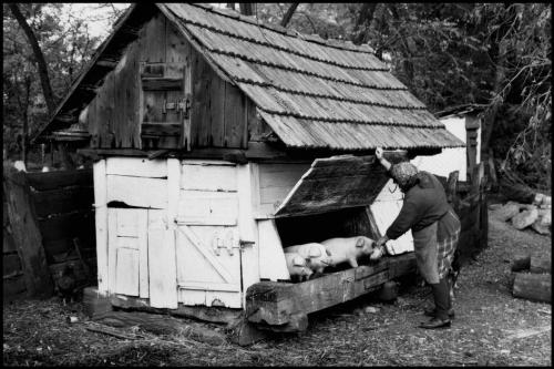 Leonard Freed HUNGARY. Korom's village. 1985.jpg