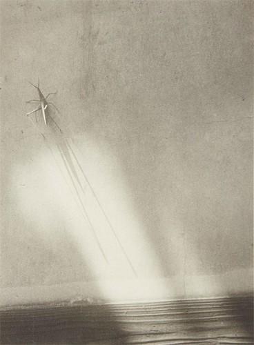 Shikanosuke Yagaki Grasshopper on wall. 1930s.jpg