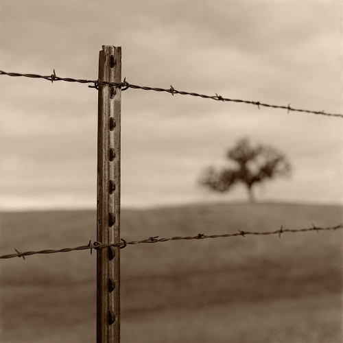 Kerik Kouklis fence+and+tree.jpg