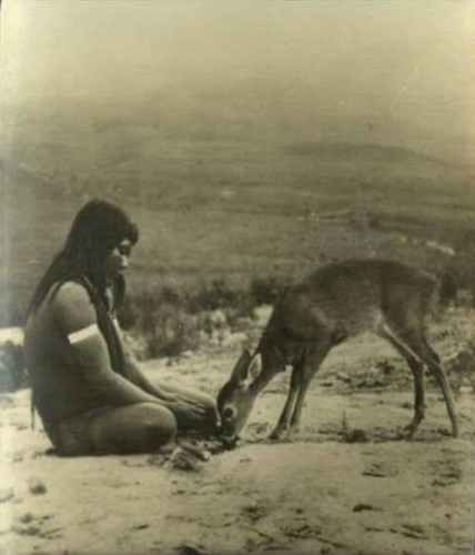 Native American Youngster with Deer rogner en bas.jpg