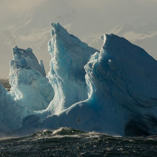 Justin Hofman Antartique.jpg