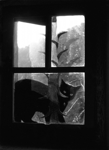 Willy Ronis 76.jpg