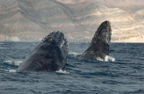 christopher swann-baleines 8.jpg