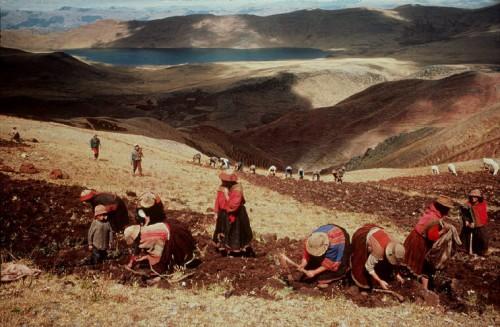 stuart franklin 1991 Peru. Near Cuzco. Harvesting potatoes in June.jpg