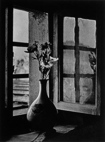 Cy Decosse flowers-in-window à Florence.jpg
