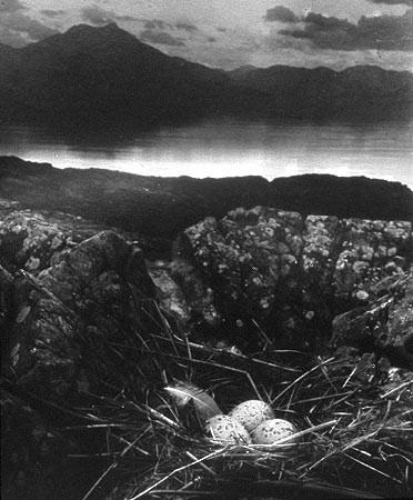 Bill Brandt, Gull's Nest, Isle of Skye, 1947.jpg