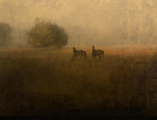 Jack Spencer 2 Wild Horses, Cumberland Island, GA, 2007.jpg