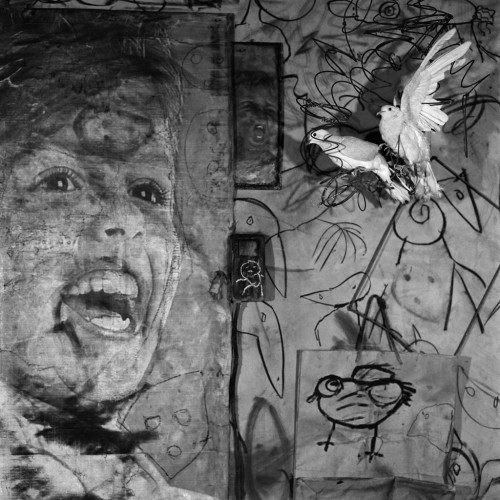 roger ballen _asylum of the birds_untitled_2009-jpg.jpg