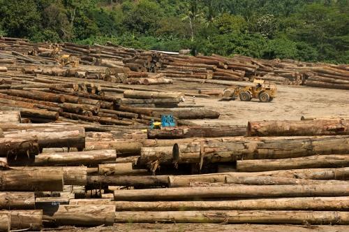 KalyanVarma_borneo_2010 plus de bois coupé entre 1985 et 2000 qu'en afrique et amazonie réunies.jpg