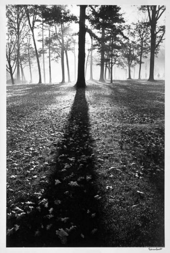 Alfred_Eisenstaedt_Forest_Shadow.jpg