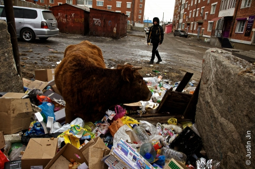 Justin-Jin-Russia-96-A cow forages in a garbage dump in Zabaikalsk, a town on the Russian side of the border with China..jpg