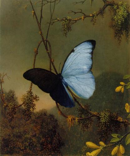 Martin_Johnson_Heade_-Blue_Morpho_Butterfly_ATC.jpg