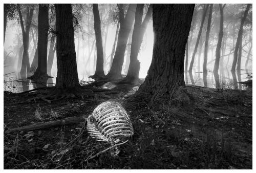 chuck kimmerle Carcass in Fog, Glendo State Park, Wyo..jpg