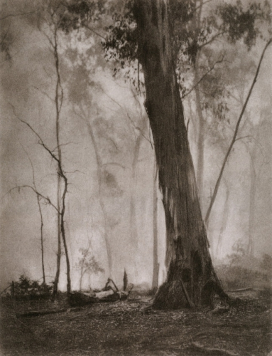 Harold Cazneaux Bush Fire Haze Mt Talbingo, New South.jpg